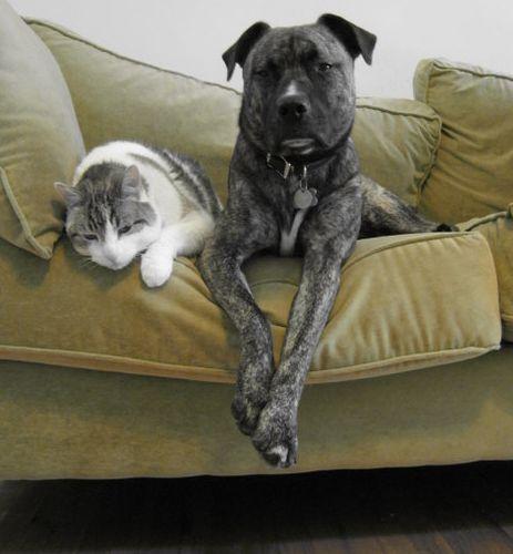 Mascotas / Foto: Ohnoitsjamie