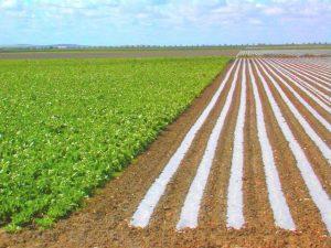 A pesar de que el país podría ser una potencia agrícola y de que posee un gran capital humano, el campo no da empleo