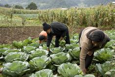 1BioAgricultura